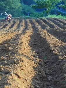 備中白小豆「白備中」の畑